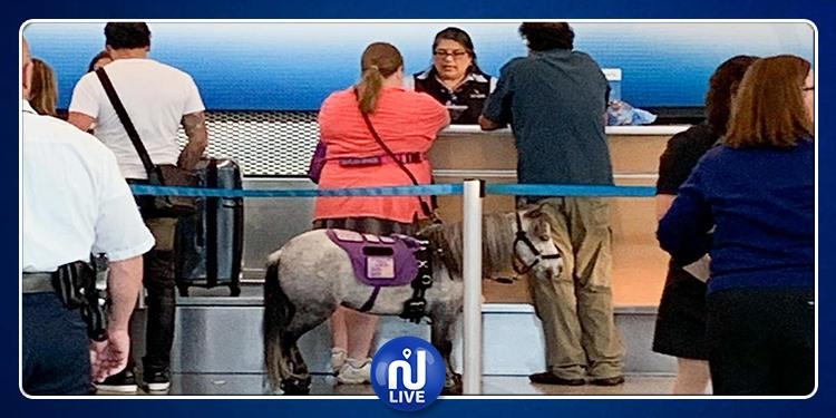 أمريكية تسافر في الطائرة صحبة حصانها (فيديو)