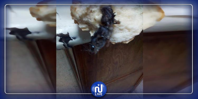 صفاقس: مواطنة تعثر على فأر داخل ''باقات'' (صور)