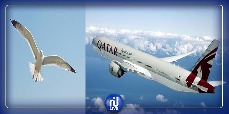 مطار تونس قرطاج: رحلة القطرية إلى الدوحة تتأخر بسبب 'طائر النورس'
