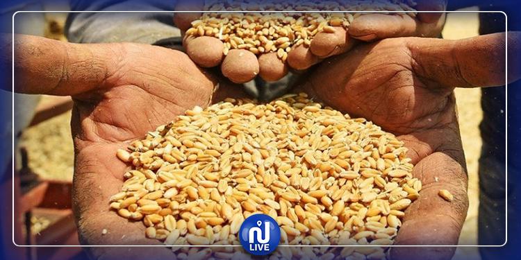 مخزون تونس من القمح يؤمّن بين 4 و5 أشهر
