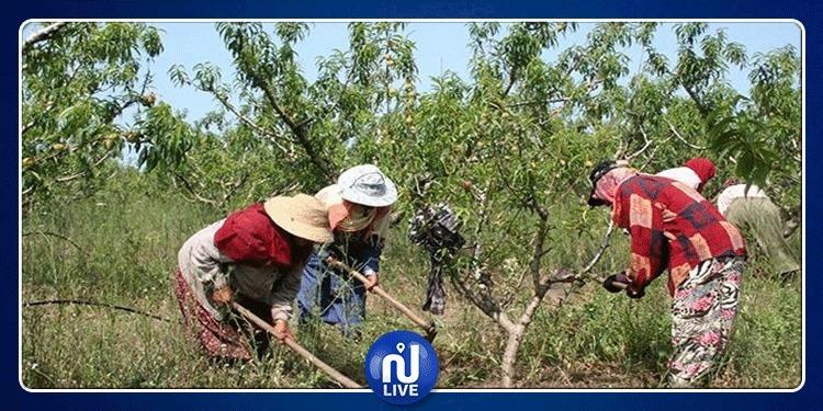 L'application ''Ahmini'' au profit des ouvrières agricoles…