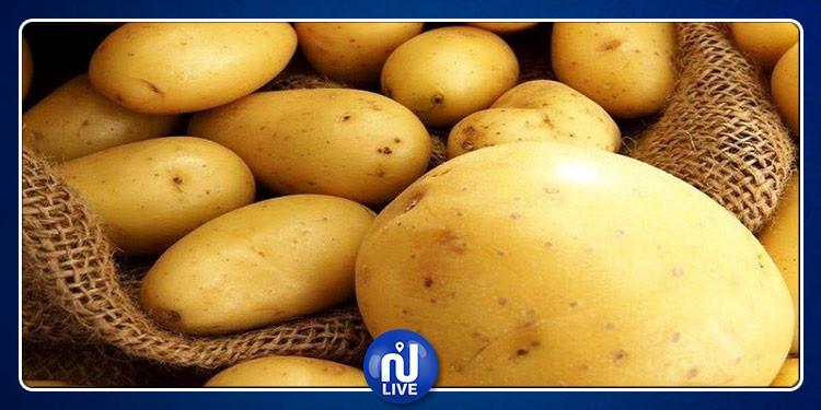 القصرين : حجز 7 أطنان من البطاطا المعدة للترويج خارج مسالك التوزيع القانونية