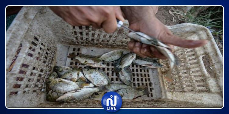 المواطن السوري الأقل استهلاكا للأسماك في العالم..لهذا السبب