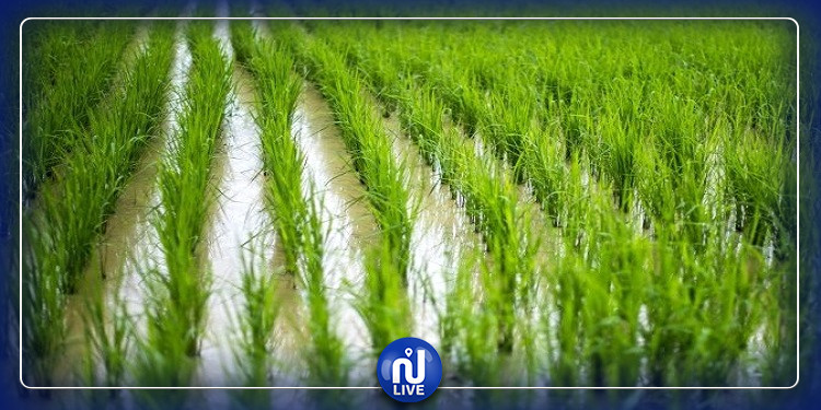 مشروع إعادة إستعمال المياه غير التّقليديّة في الزّراعة بالبلدان المتوسطيّة