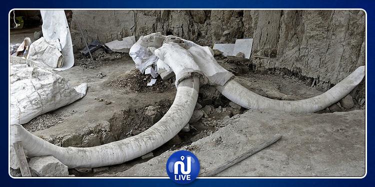 المكسيك: العثور على رفات 14 حيوانا عملاقا (صور)