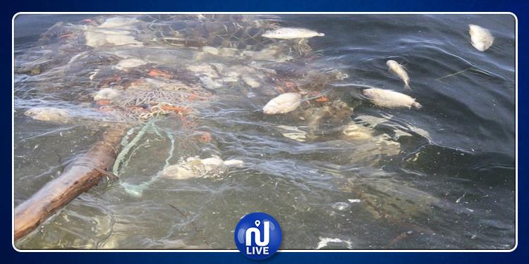 نفوق كميات كبيرة من الأسماك بالمهدية وصفاقس(صور)