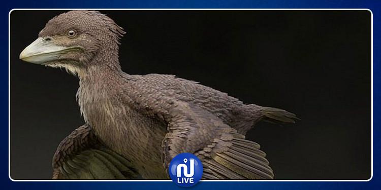 اليابان: اكتشاف طيور عاشت مع الديناصورات (صور)
