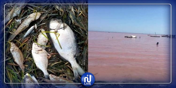 ظاهرة ''المدّ الأحمر'': اقتراح نقل أقفاص تربية الأسماك العائمة في البحر