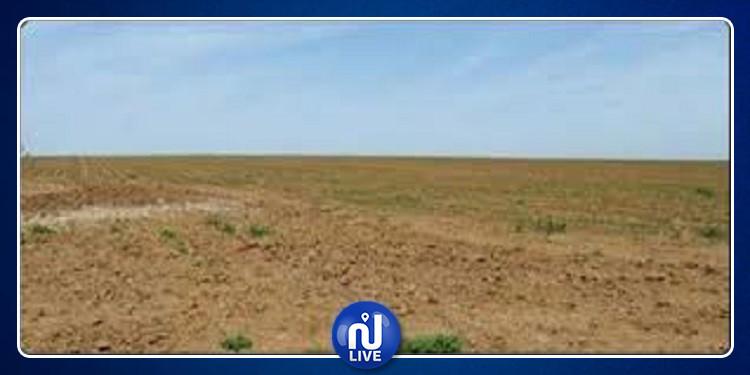نابل: استرجاع عقار دولي يمسح 416 هكتار لفائدة الدولة