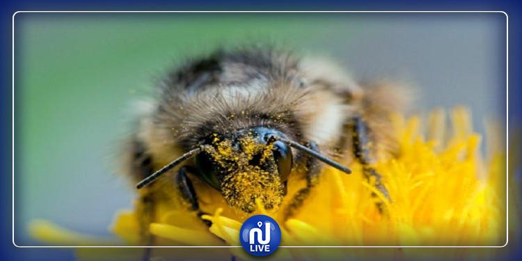 النحل يقتل مسنا في البرازيل