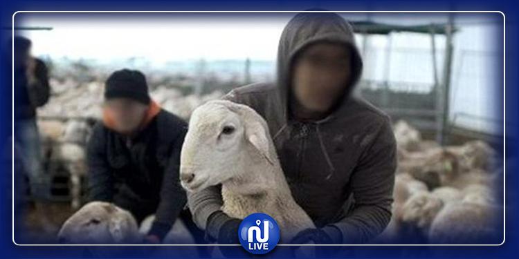 سرقة 119 رأس غنم: الاشتباه في شخصين بسيدي حسين