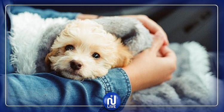 امتلاك كلب أليف في الطفولة يقلل  خطر الإصابة بالفصام