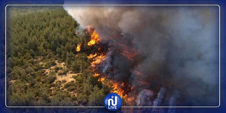 الشبيكة: حريق هائل قرب المشاتل الغابية وتخوفات من توسع رقعته