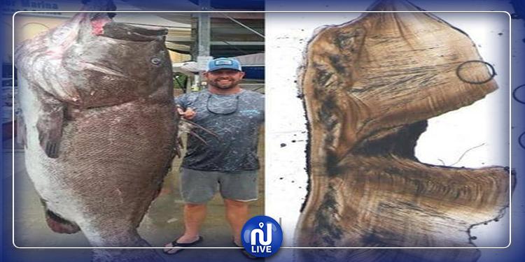 ''السمكة العجوز'': العثور على أكبر سمكة سنا في العالم (صور)