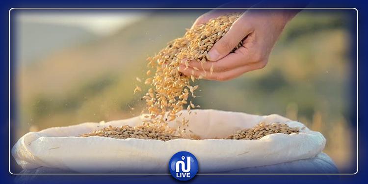 انطلاق موسم الحصاد بجندوبة وتوقعات بإنتاج كبير للحبوب