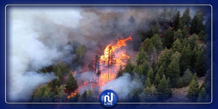 السيطرة على حريق جبل الناظور بغار الملح