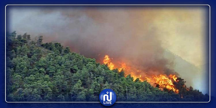 ساقية سيدي يوسف: تواصل الجهود لإخماد آخر حريق بجبل الخروبة