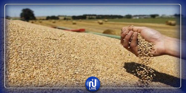 تجميع أكثر من 58 الف قنطار من القمح الصّلب بسيدي بوزيد
