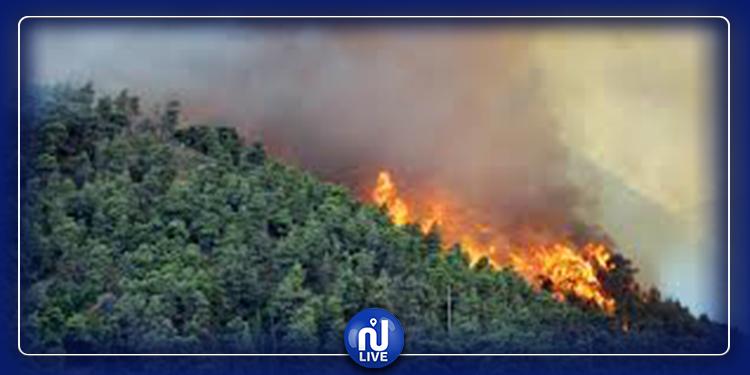 بنزرت: حريق هائل ينتشر على امتداد عدة مناطق غابية