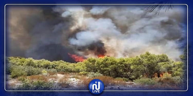 القبض على شاب يشتبه في تعمده إضرام النيران بالمنطقة الغابية بجبل طابونة ببنزرت