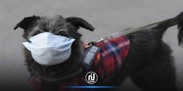 أول إصابة بكورونا لكلب بالأردن