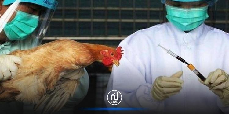 هولندا تعدم 35700 دجاجة بسبب إنفلونزا الطيور