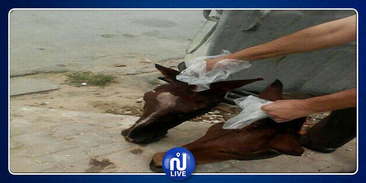 معتمد 'سيدي بوعلي' يوضّح حقيقة العثور على 11 رأس خيل في مصب للفضلات