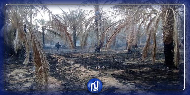 قبلي: حريق هائل بواحة نخيل