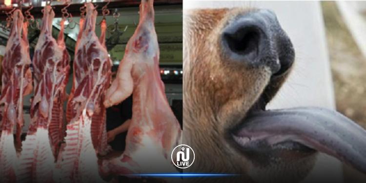 انتشار مرض اللسان الأزرق في صفوف الماشية بقفصة