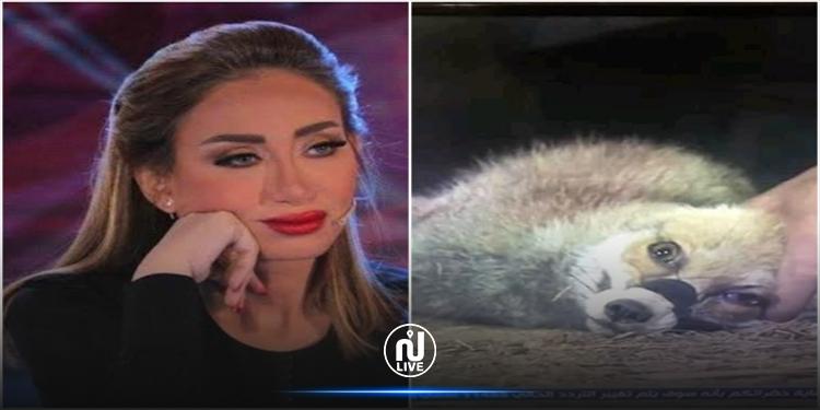 بعد حلقة تعذيب الثعالب: إيقاف برنامج ريهام سعيد