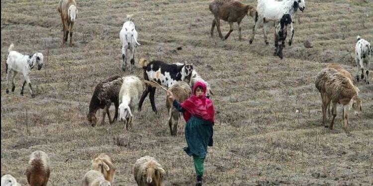 Kasserine: deux jeunes bergères portées disparues
