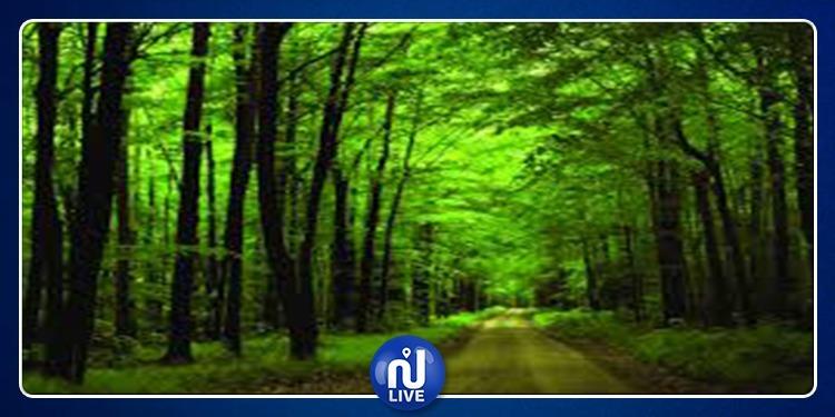 أول غابة حضرية في تونس