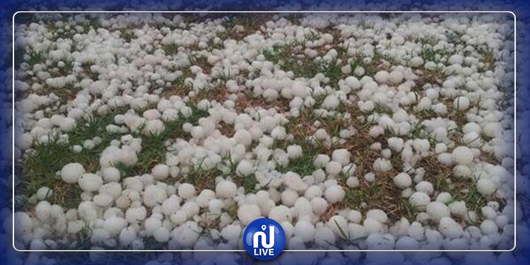 منوبة: تساقط البرد يخلّف أضرارا بمحاصيل الفلاحين