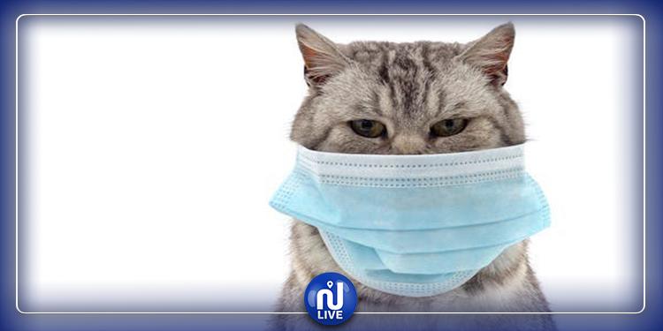 ارتفاع الإصابات بفيروس كورنا لدى القطط