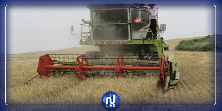 القيروان: انطلاق موسم الحصاد يوم 26 ماي