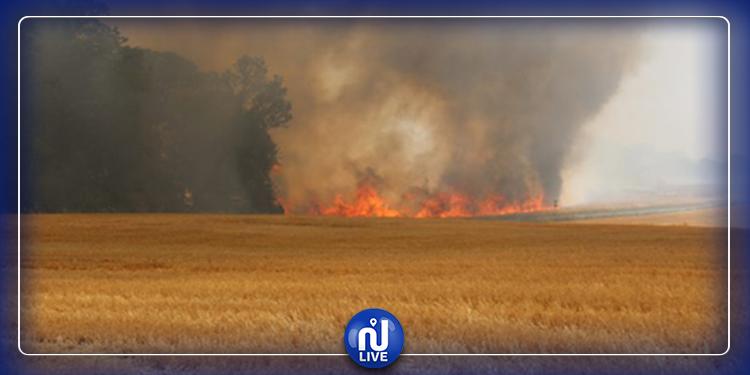 منوبة: حريق هائل يأتي على 13 هكتارا من الحبوب والغابات