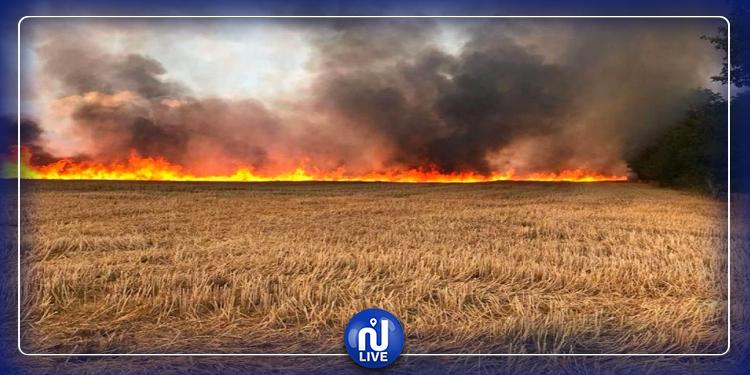 Béja: 8 hectares de blé ravagés par le feu