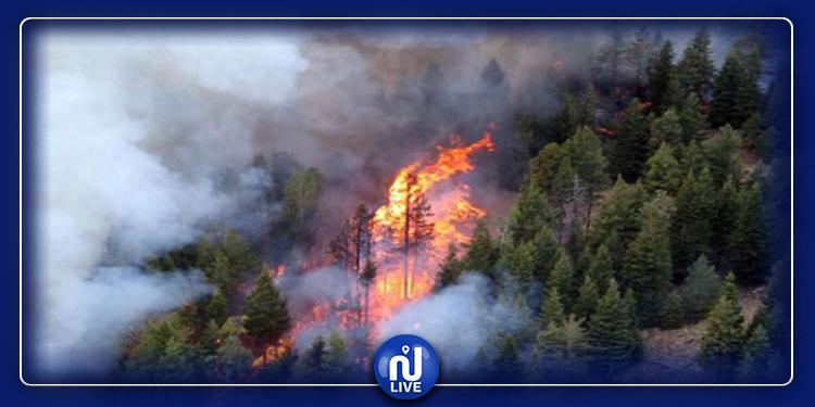 L'armée internationale intervient pour éteindre un incendie à Tabarka