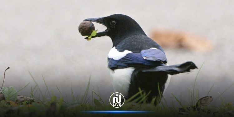 Marseille: des oiseaux formés pour collecter les déchets