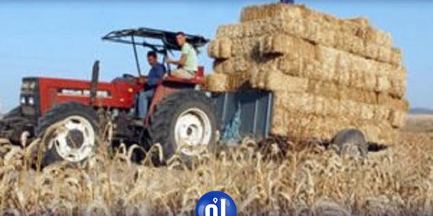 باجة: تنظيم مهرجان لأول مرة في الجهة احتفاء بموسم الحصاد