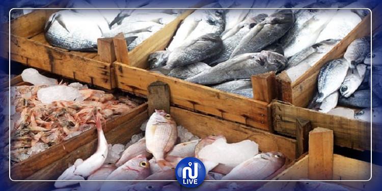 سواحل ولاية مدنين تسجل عودة العديد من انواع الاسماك