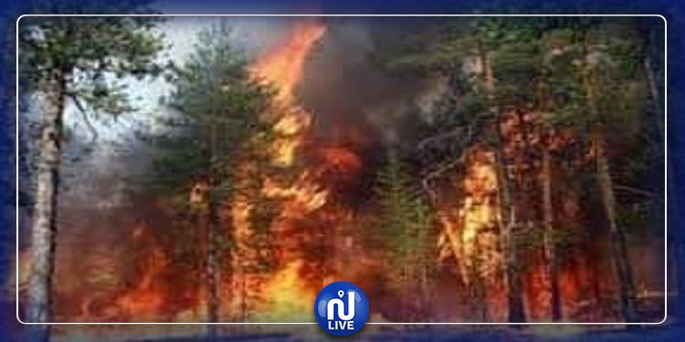 ساقية سيدي يوسف: اندلاع حريق هائل بجبل الاخفاج