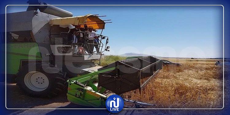 سليانة: تقدم موسم الحصاد بالجهة بنسبة 83 %