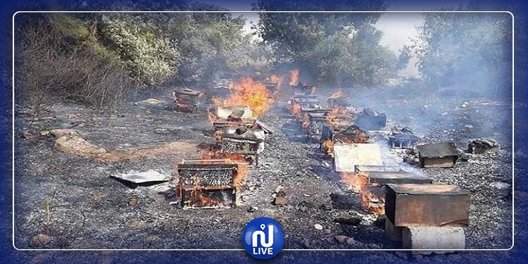 قلعة سنان:احرق مجهولون منحلتها ومورد رزقها الوحيد، فأعاد أهل الخير إليها الحياة فجرا بمناحل جديدة:(صور)