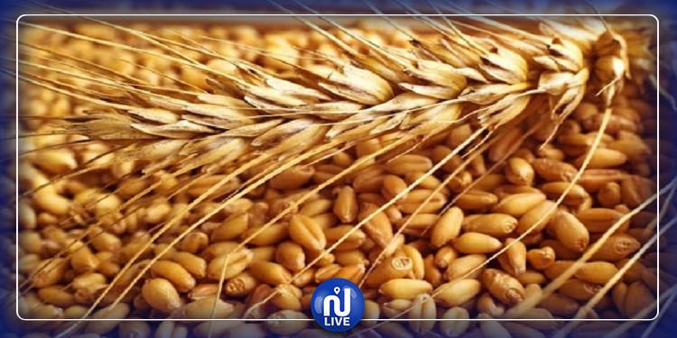 صابة الحبوب  لن تغطي سوى 5 أشهر من الاستهلاك