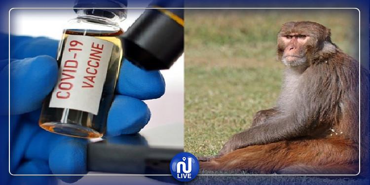 COVID-19 : Un vaccin américain donne des résultats prometteurs chez les singes