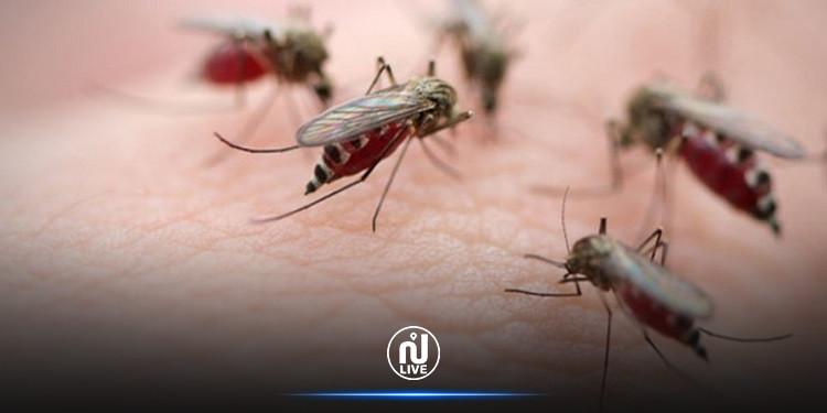 الجزائر: تسجيل 74 اصابة بداء الملاريا