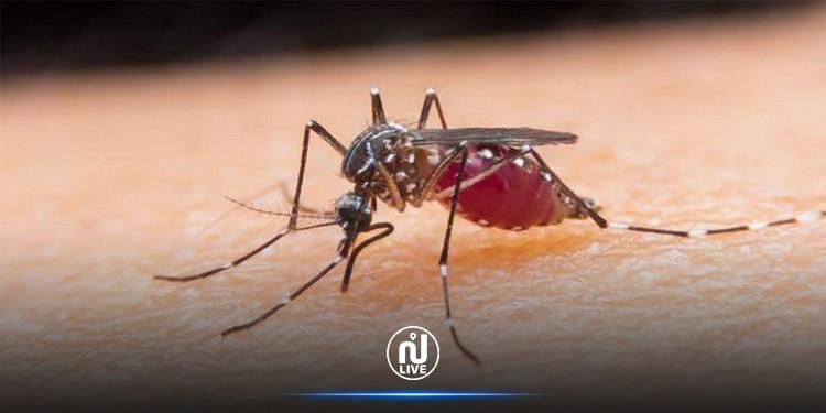 الصّحة العالميّة تحذّر من انتشار الملاريا