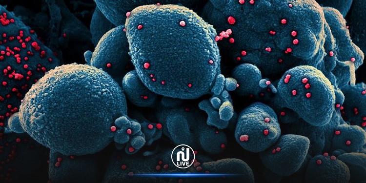 كيف يهاجم فيروس كورونا الخلايا البشرية؟