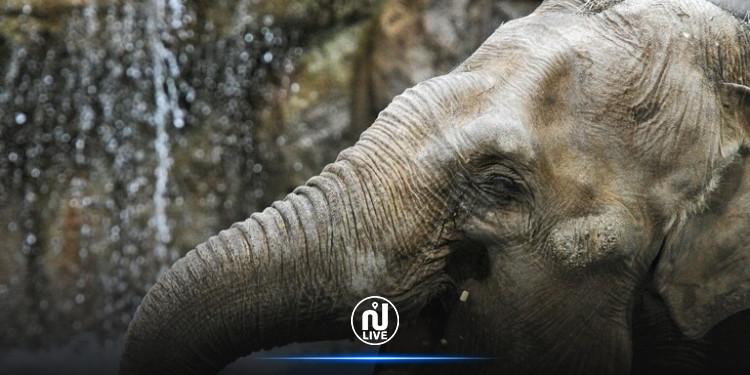 دعوى قضائية من فيل ضد حديقة حيوان